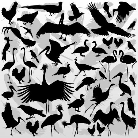flamenco ave: Grandes y pequeños pájaros colección detallada ilustración de fondo vector