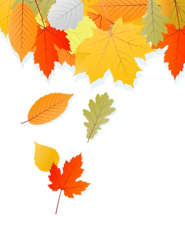 sunlit: Leaves autumn vector background for poster