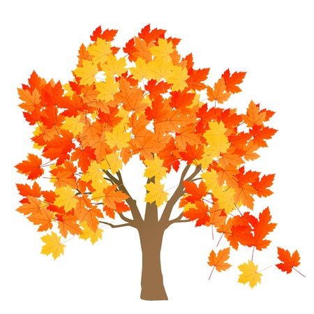 tree in autumn: Maple tree autumn leaves background vector for poster