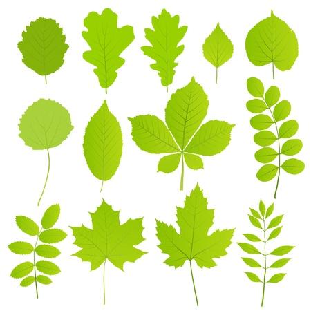Bladeren set van bomen geïsoleerd op witte achtergrond Vector Illustratie