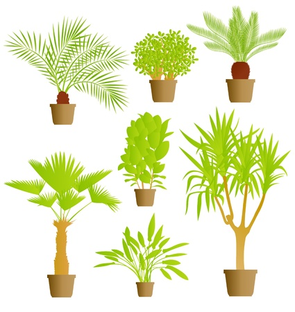 plant pot: House plants vector background set