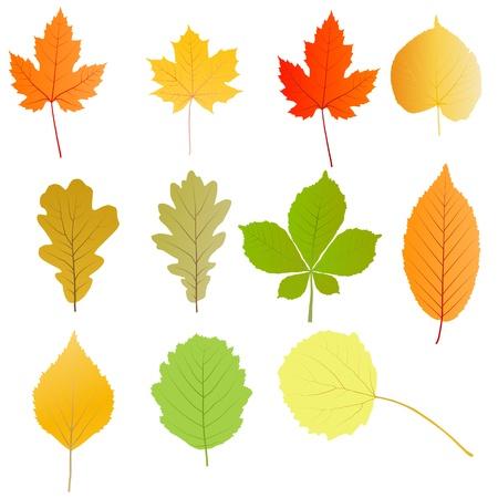 elm: Autumn leaves set vector background for poster Illustration