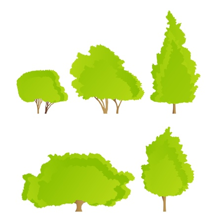Trees detailed illustration collection background vector Stock Vector - 15795083