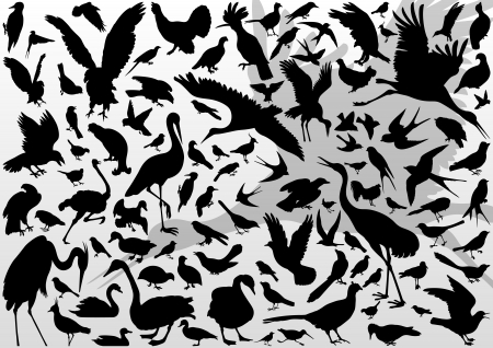 Big and small birds detailed illustration collection background vector Vector