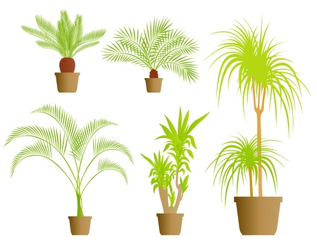House plants vector background set