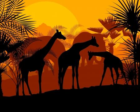 themed: Giraffe at sunset vector background for poster Illustration