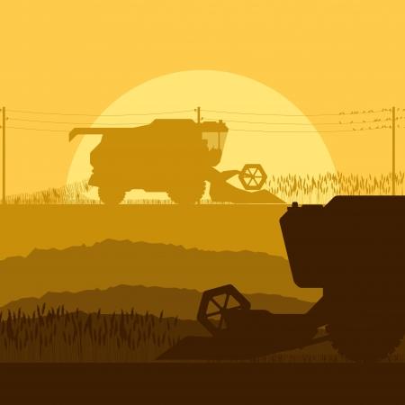 cosechadora: Combine la cosecha de los cultivos en los campos de grano ilustraci�n vectorial de fondo