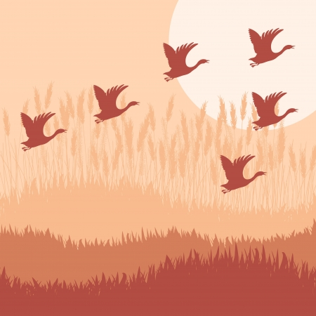 fowl: Goose hook flying background autumn vector for poster