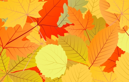 Leaves autumn vector background for poster or card Stock Vector - 16289147