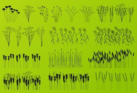 untamed: Plantas, hierbas y flores siluetas ilustraci�n detallada colecci�n de vectores de fondo