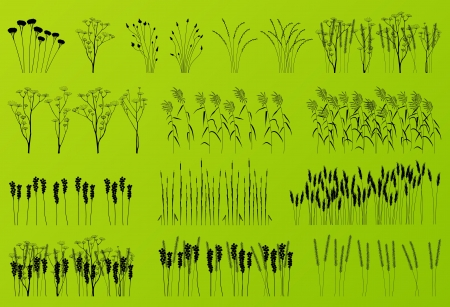 Plants, grass and flowers detailed silhouettes illustration collection background vector Vector