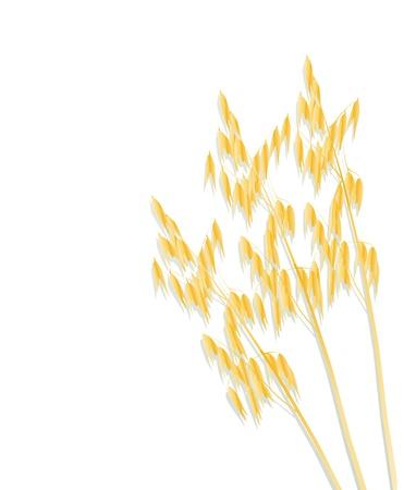 bran: Oats background vector for poster Illustration