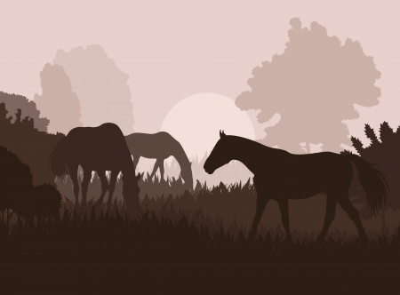 gelding: Horses in field vector background for poster Illustration