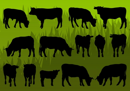 domestic cattle: Beef cattle and cow detailed silhouettes illustration collection background vector