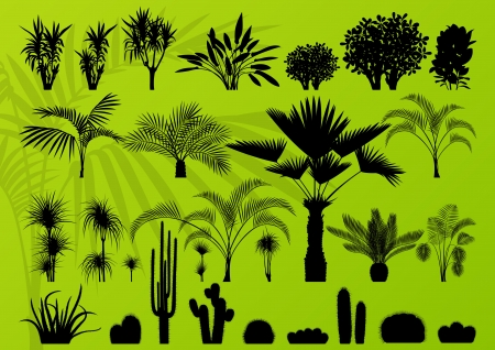 Exotic plant, bush, palm tree and cactus detailed illustration collection background vector Stock Vector - 16289206