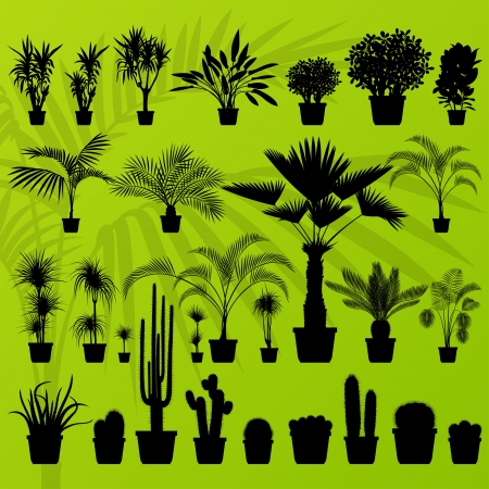 plant pot: Exotic plant, bush, palm tree and cactus detailed illustration collection background vector Illustration