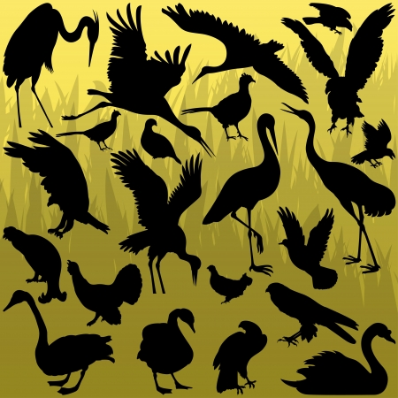 Big and small birds detailed illustration collection background vector Stock Vector - 16289080
