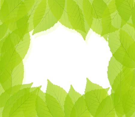 beech tree beech: Green leaves background vector template