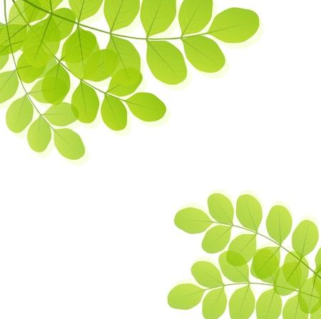 작은 숲: 녹색 배경 벡터 템플릿 나뭇잎