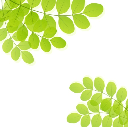 Green leaves background vector template Stock Vector - 16289138