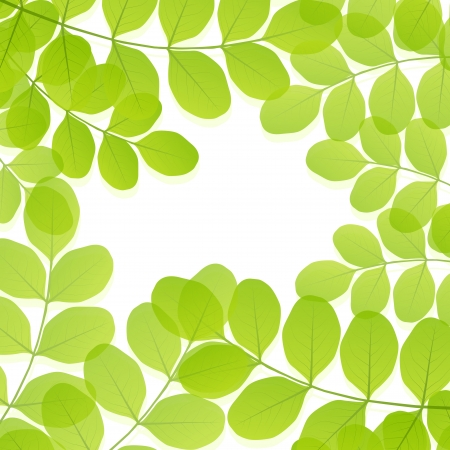 beech: Green leaves background vector template
