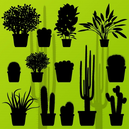 Cactus plant and exotic bushes detailed illustration collection background  Vector