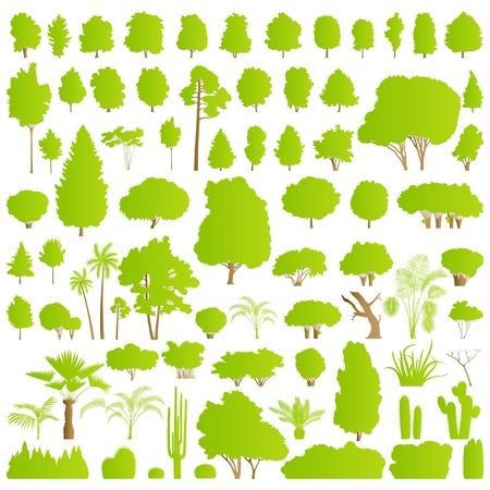 Nature tree, bush, scrub, palm and cactus plants detailed forest silhouettes Vector