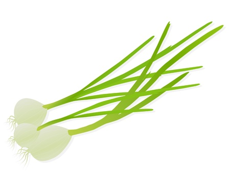 spring onions: Green onions and spring onions detailed illustration background