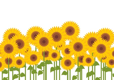 Yellow sunflowers background Stock Vector - 16932516