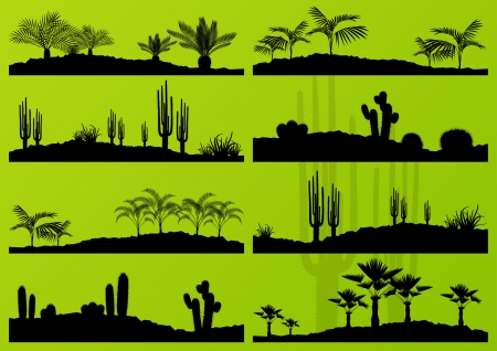 wild nature wood: Desert cactus plant and exotic palm trees detailed landscape illustration collection background  Illustration