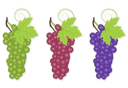 grapes in isolated: Grape background ecology concept