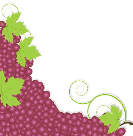 Grape background ecology concept Stock Vector - 16932445