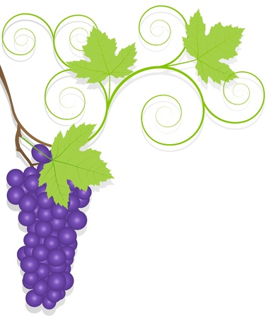 Grape background ecology concept Stock Vector - 16932435