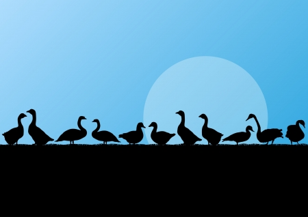 Farm duck and goose silhouettes in countryside landscape illustration background vector