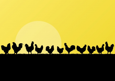 chicken and egg: Farm chickens and roosters silhouettes in countryside landscape illustration background vector