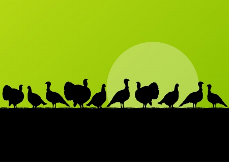 wild turkey: Wild turkey hunting season silhouettes in countryside landscape illustration background vector