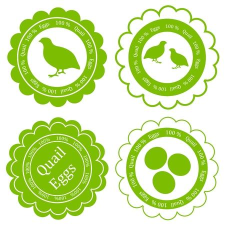 quail: Quail eggs vector background label stamp green farm ecology concept Illustration