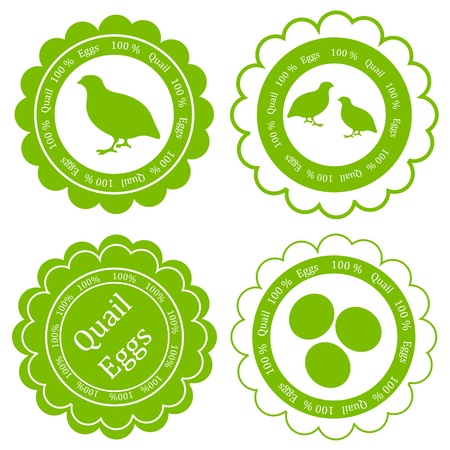 huevos de codorniz: Quail vector huevos fondo granja etiqueta de sello verde ecología concepto