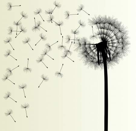 Blow Dandelion background for poster Vector