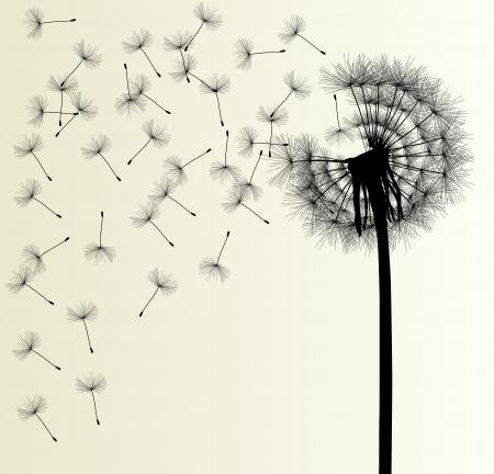 dandelion seed: Blow Dandelion background for poster Illustration