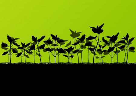 herbs wild: Nettles plantas de hierbas silvestres siluetas detallada ilustraci?e fondo Vectores