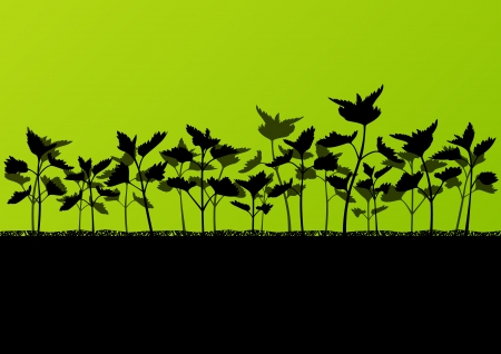 nettle: Nettles wild herbs plants detailed silhouettes illustration background Illustration