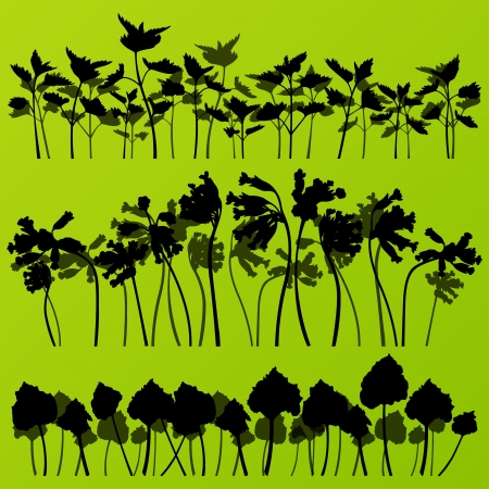 rhubarb: Wild nettle, rhubarb and larkspur plants detailed silhouettes illustration collection background