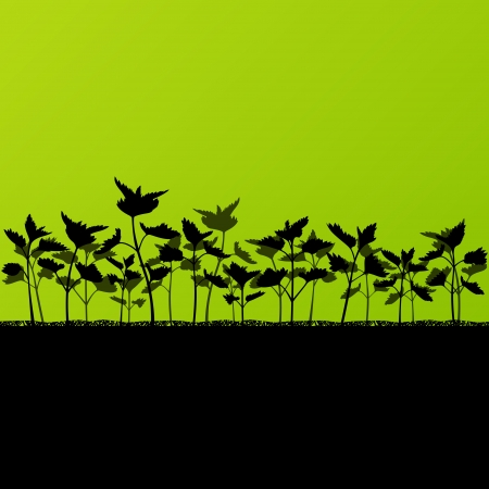 Nettles wild herbs plants detailed silhouettes illustration background Vector