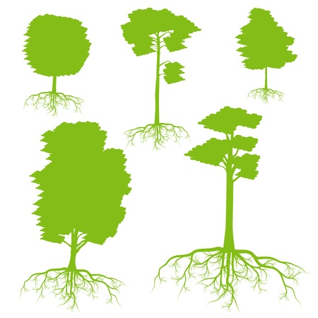 tree roots: Árbol con raíces conjunto de antecedentes concepto de la ecología