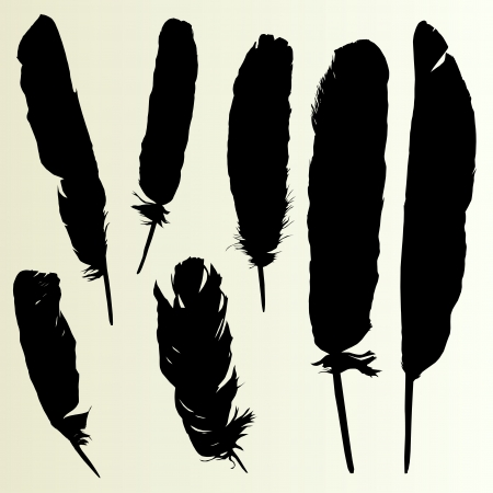 bristles: Feather set background collection for poster Illustration