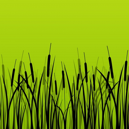 Grass, reed and wild plants detailed silhouettes illustration background Vector