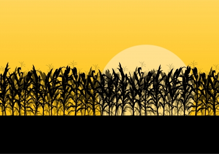 Corn field detailed countryside landscape illustration background vector Vector