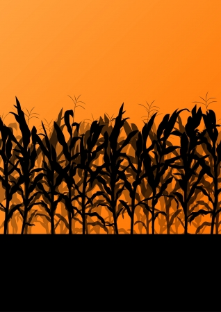 cornfield: Corn field detailed countryside landscape illustration background vector