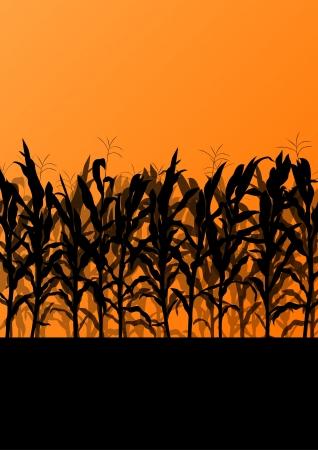 champ de mais: domaine, illustrations de fond de paysage de campagne détaillée de maïs Illustration
